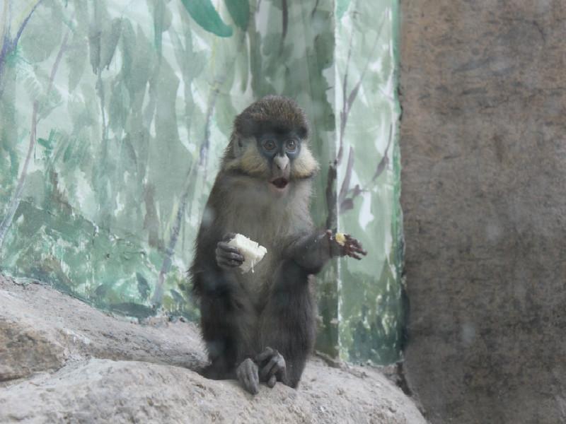 黄河三角洲动物园马年欢乐多-精彩活动-科普教育
